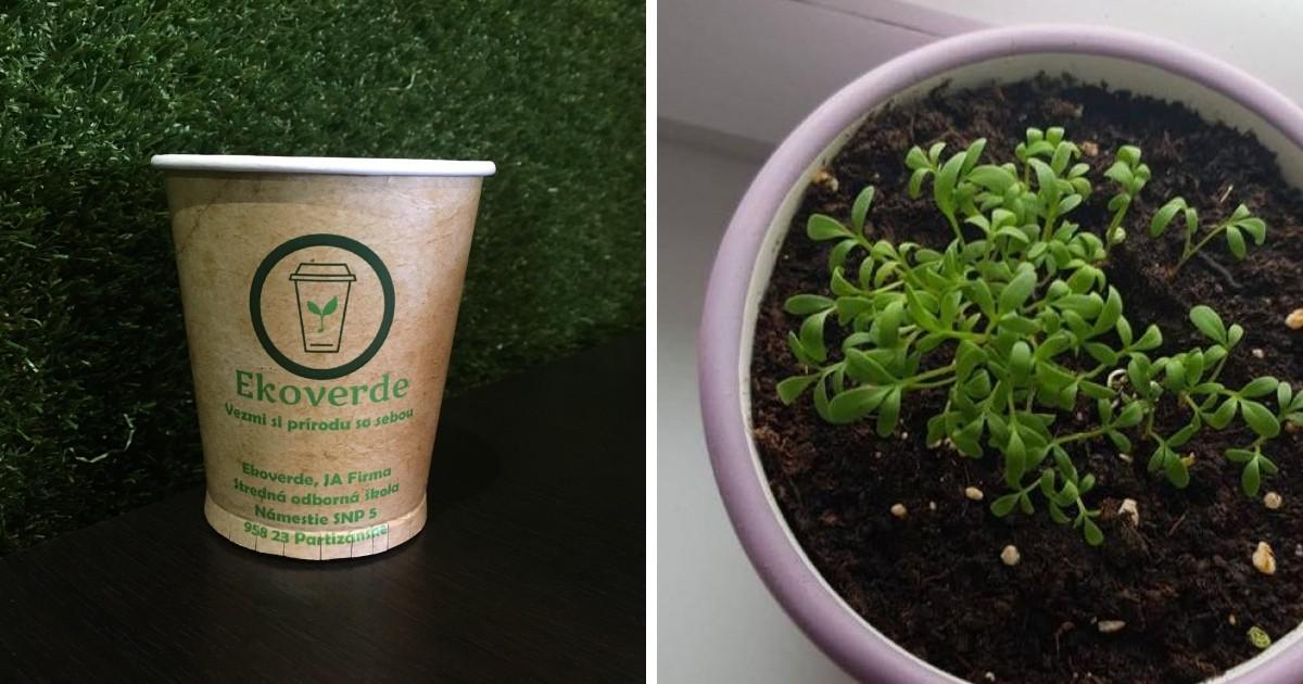 Takáto rastlinka vám vyrastie z kelímku od Ekoverde.