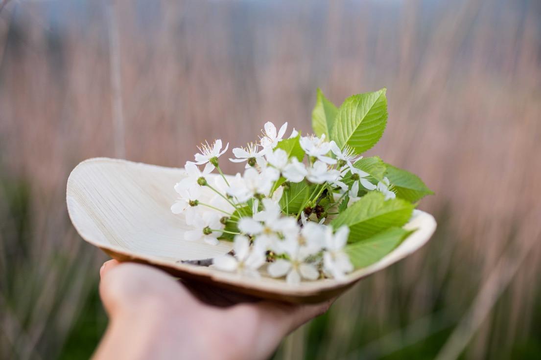 Produkty zpalmových listov, hlavne taniere rôznych tvarov, sú aj na viac použití astoja naozaj pár centov. Každý tanier zpalmového listu je originálny, so svojou vlastnou štruktúrou, čo len dodáva celému pocitu zjedenia nový šmrnc.