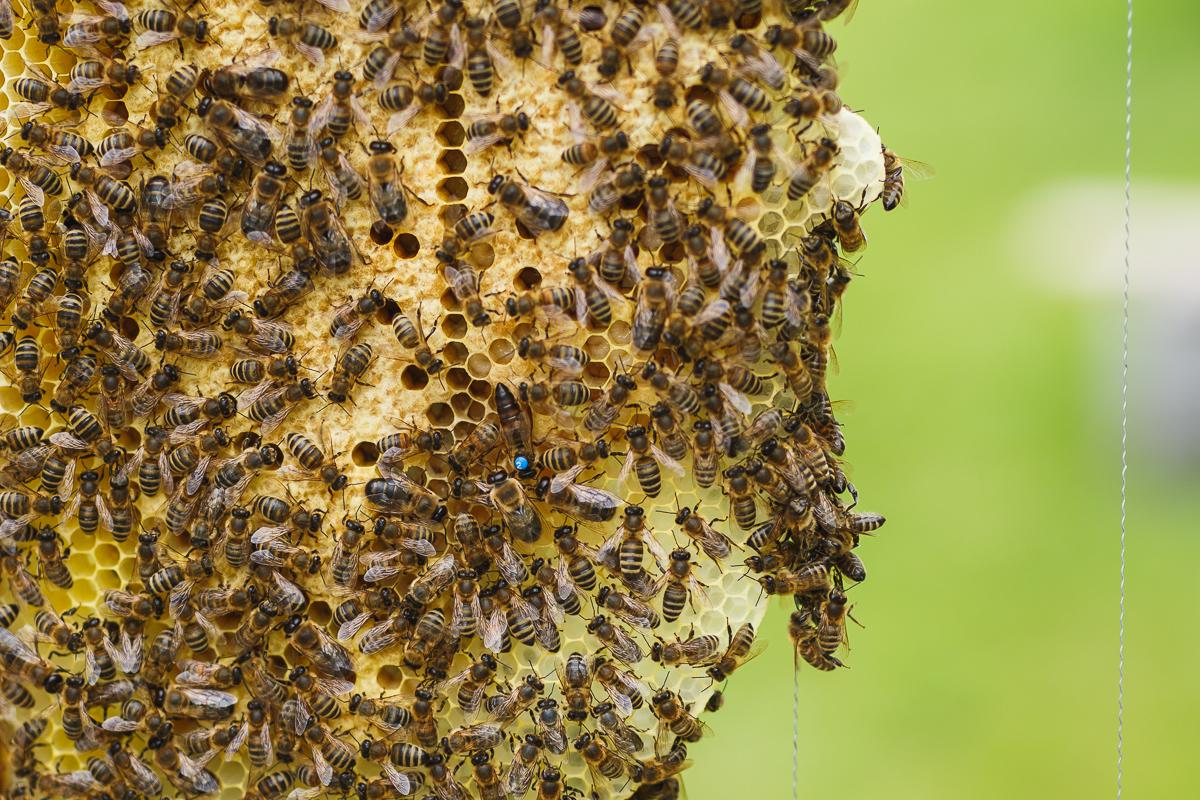 Bez včiel by náš život bol podľa Adama jednoznačne ťažší.
