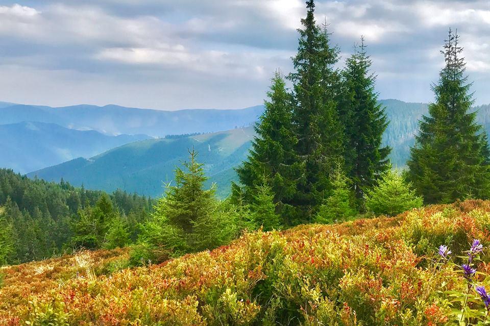 Jánošíkova kolkáreň je pralesová lokalita, ktorá sa nachádza na severozápadných úbočiach Malej Smrekovice (1 485 m) vo Veľkej Fatre. Niektoré komplexy horských smrečín tu dosahujú vek až 250 rokov. Hlavným hrebeňom rezervácie vedie pekná značená turistická trasa.