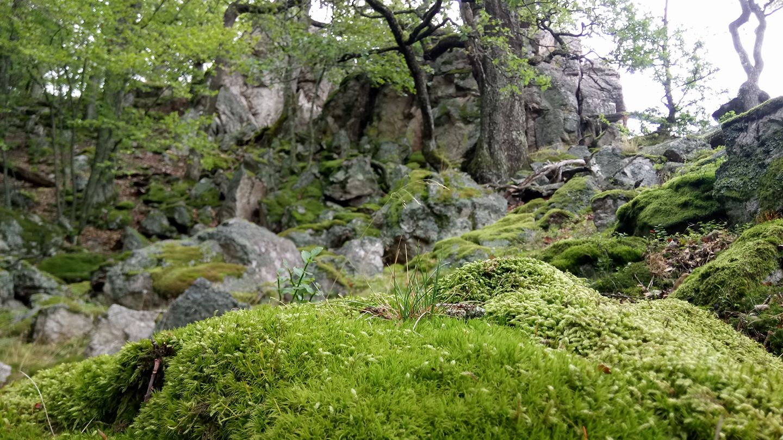 Kamenné more v Sokolích skalách v Považskom Inovci.