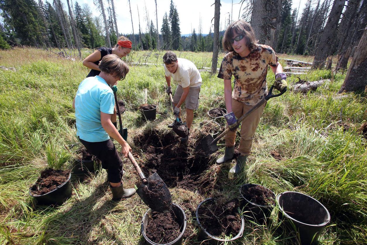 Dobrovoľníci sa snažia vrátiť do močiarov na Šumave vodu