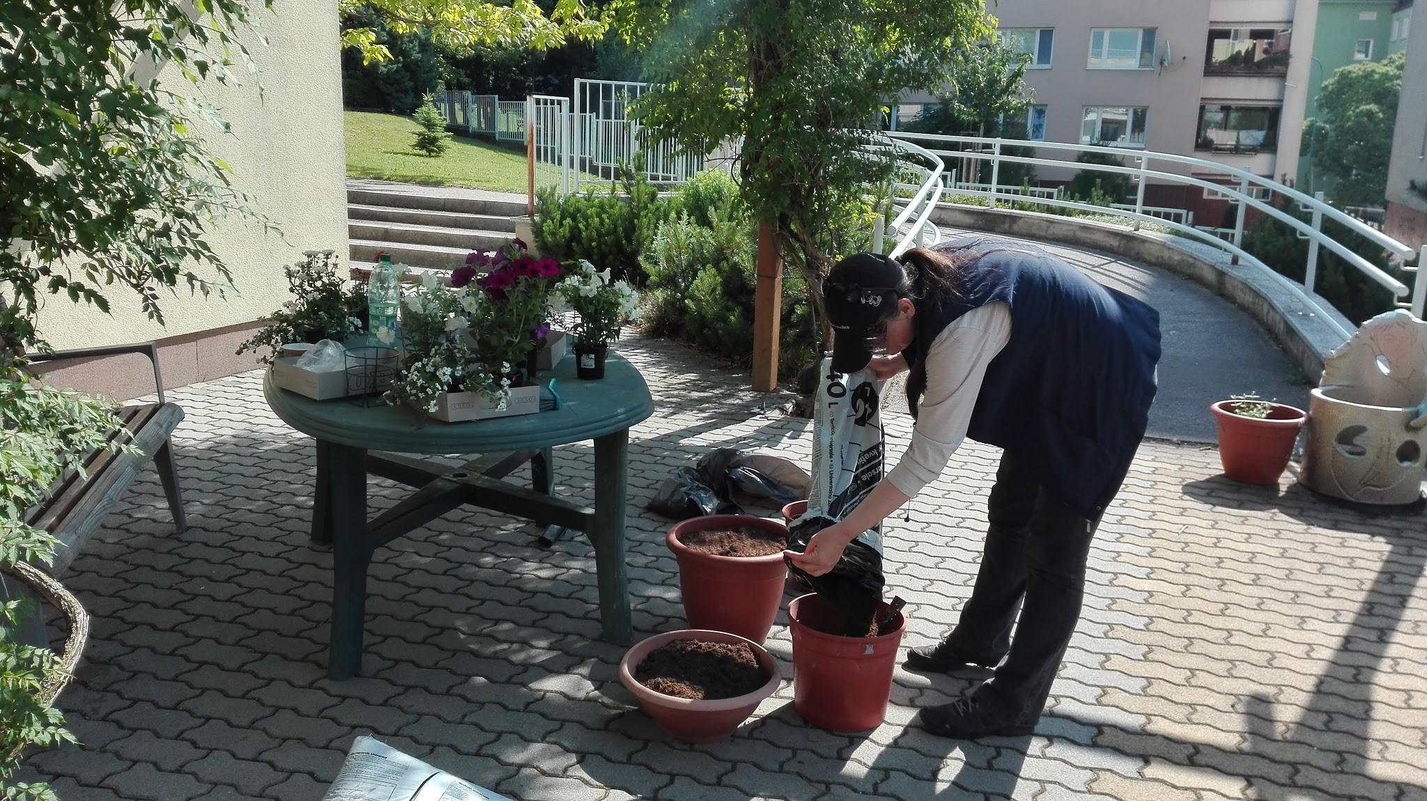 Niektoré kvety v hlavnom meste môžete obdivovať aj vďaka bezdomovcom, ktorí spolupracujú s mimovládnou organizáciou STOPA.